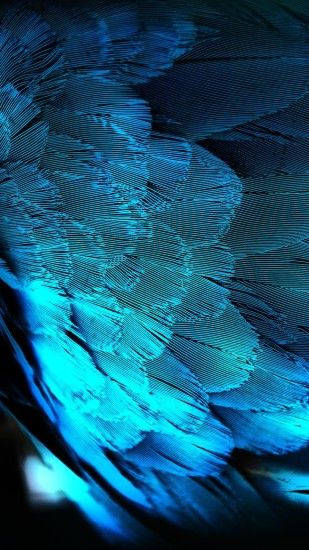 Blue HD Peacock Feathers Android Wallpaper ...