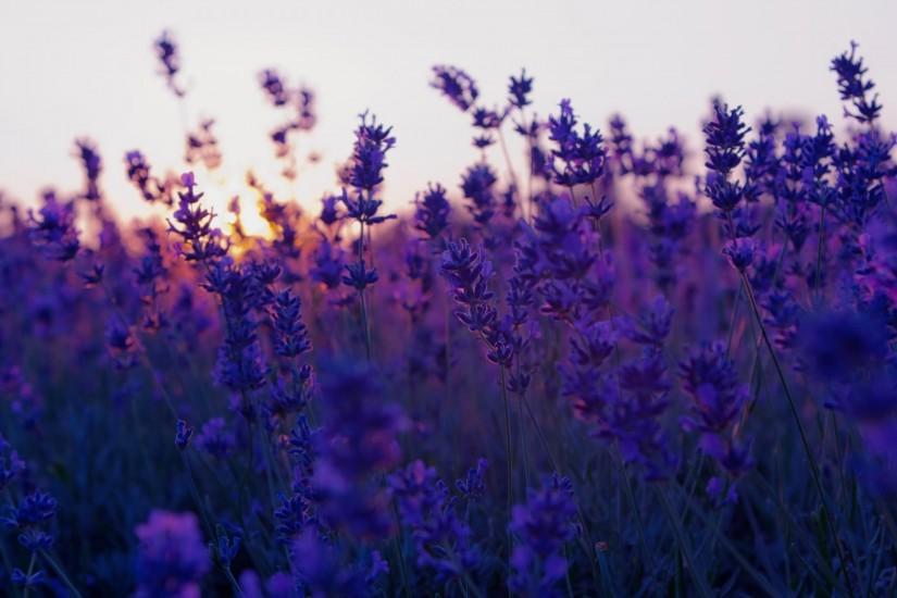 Flower Background Tumblr Download Free Stunning