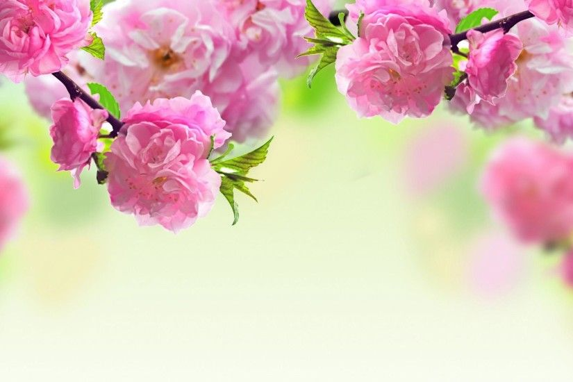 With Free Download Image Desktop Widescreen Spring Wallpapers .