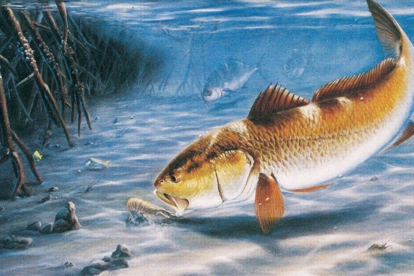 Redfish Wallpaper 14917 HD Wallpapers | wallpaperpretty.