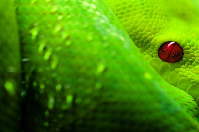 Green Boa Wallpaper Background | 2686