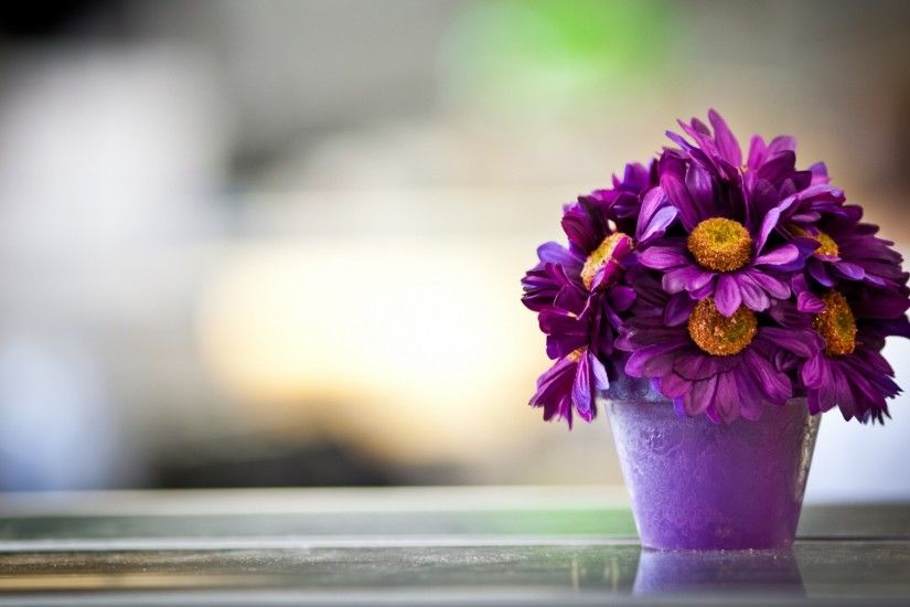 Preview wallpaper flower, pot, purple, petals 1920x1080
