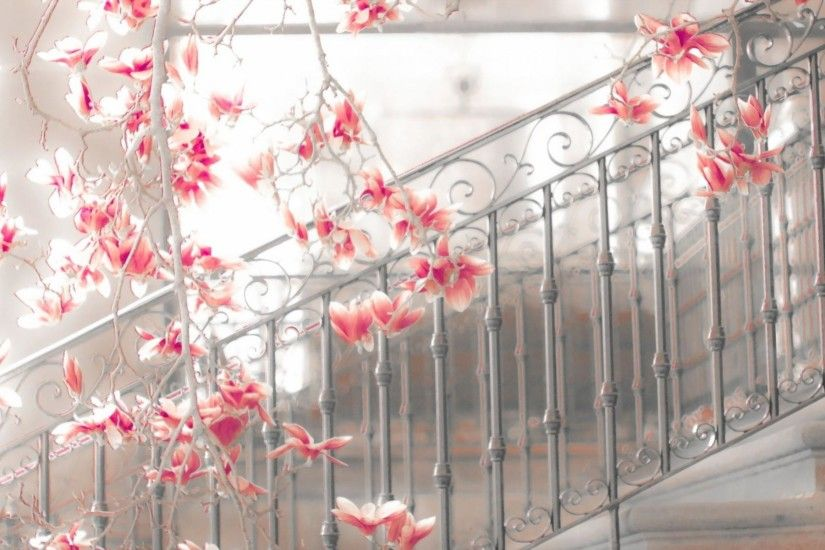 HD Magnolia Steps Flowers Blossoms Mood Stairs Architecture Background  Images Wallpaper