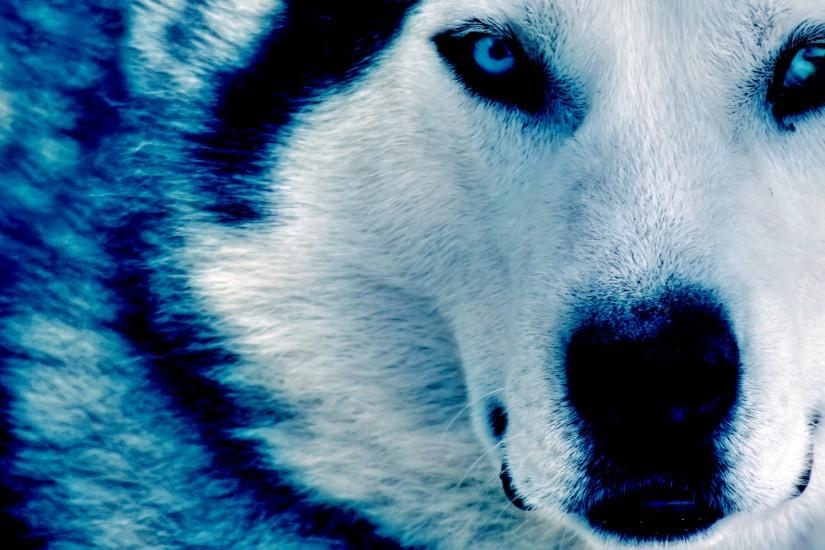 download free wolf background 2816x1880