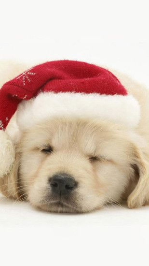 Cute Puppy In Christmas Hat iPhone 6 wallpaper