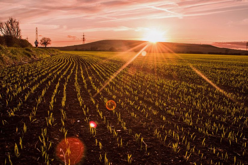 Field Crop Sunlight Sunset Plants wallpaper | 1920x1200 | 79373 |  WallpaperUP
