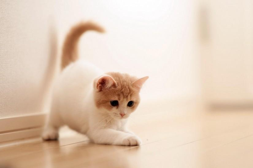 Cute Cat Wallpaper Hd 1920×1200 Cute Cat Backgrounds (46 Wallpapers) |  Adorable