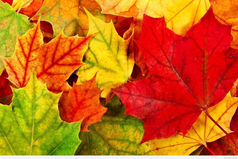 ... colorful-autumn-leaves-wallpaper ...