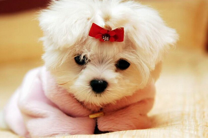 Cute Dog Wallpapers HD Photo