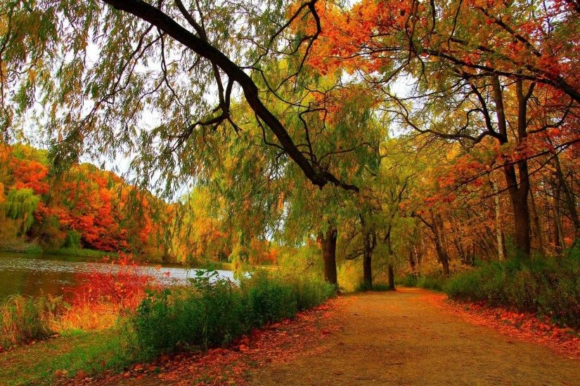 AUTUMN fall tree forest landscape nature leaves wallpaper | 2048x1345 |  812758 | WallpaperUP