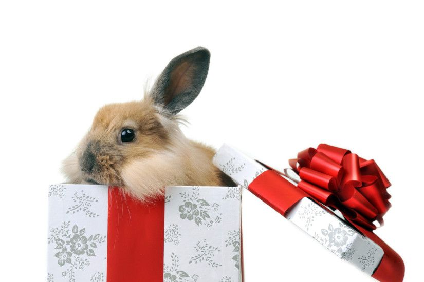 Cute Bunny Gift wallpaper