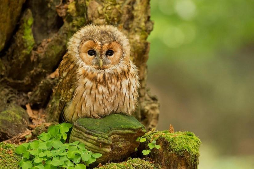 HD Cute Owl Backgrounds - wallpaper.wiki Cute Owl Image Free Download PIC  WPE005178