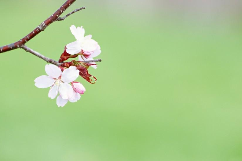 download free spring background 1920x1200 free download