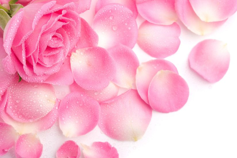 pink flowers backgrounds