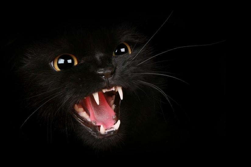 Black Cat HD Wallpapers | Black Cat Images | Cool Wallpapers