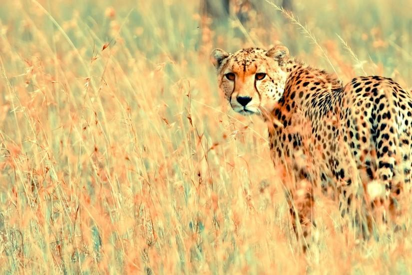 75 Animal Backgrounds ① Download Free Cool Hd Wallpapers For