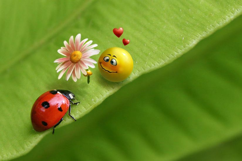 Ladybug and smiley face HD wallpaper