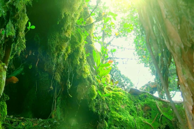 Sun shining through dense thicket of tropical jungle and illuminating tree  overgrown with green fluffy moss