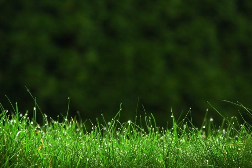 large grass wallpaper 1600x1200 download free
