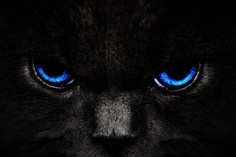 black wallpapers cat jpg