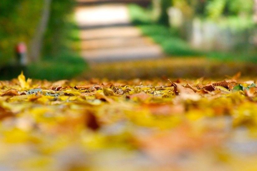 close up autumn yellow leaves leaves leaves leaves land blur blur background  macro leaves autumn autumn