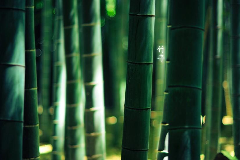 popular bamboo wallpaper 1920x1080