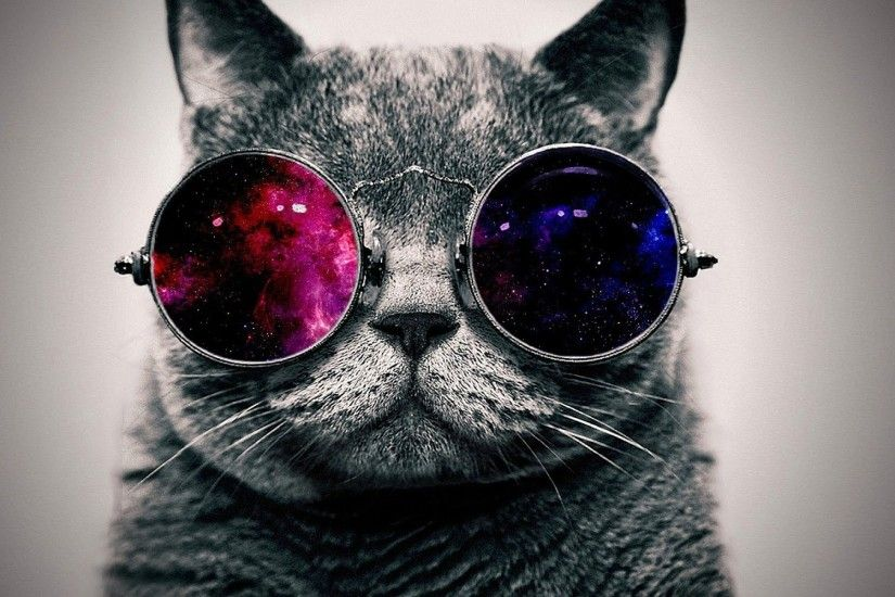 ... cool cat wallpaper 71 images ...