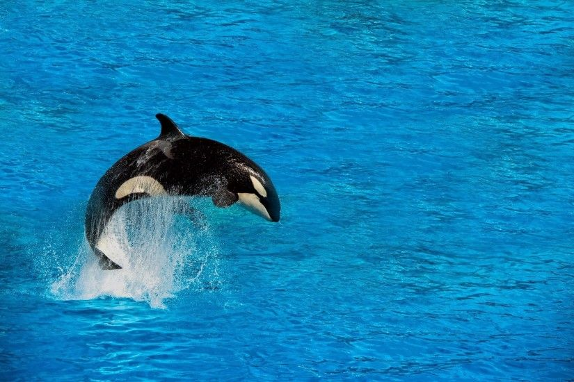 Orca wallpapers for android