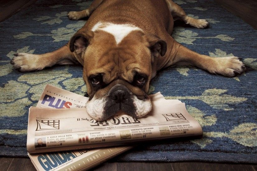 Get the latest dog, boxer, newspaper news, pictures and videos and learn  all about dog, boxer, newspaper from wallpapers4u.org, your wallpaper news  source.