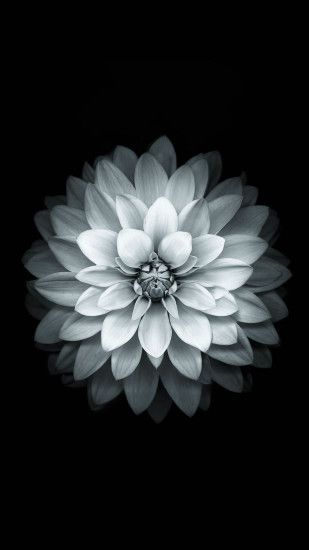 Black White Apple Lotus Flower Android Wallpaper ...