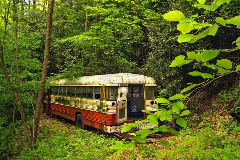 nature, Trees, Forest, Buses, Abandoned Wallpapers HD / Desktop and Mobile  Backgrounds
