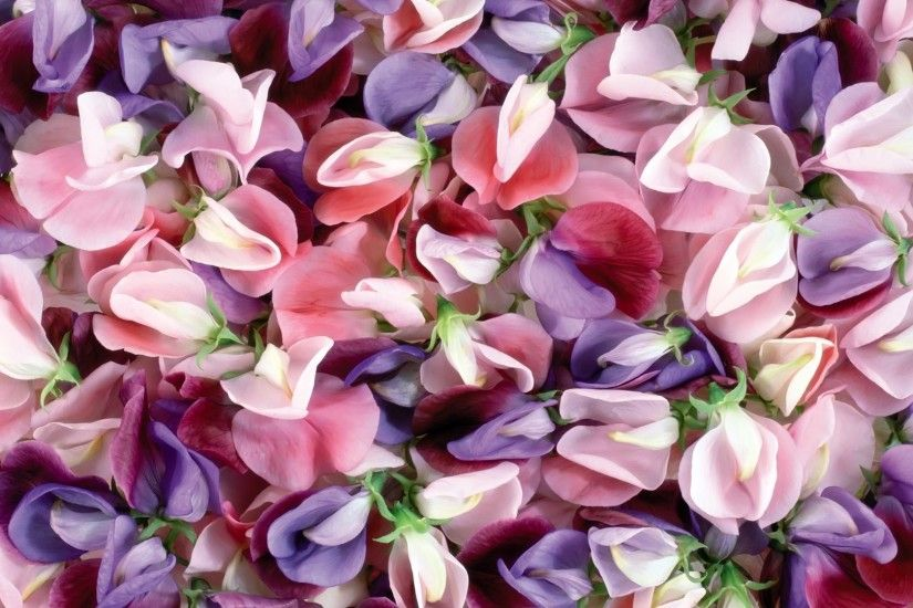 Pink And Purple Flowers Background