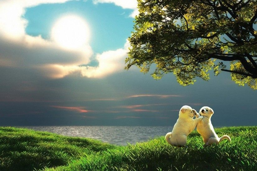 dogs, background, sun, animals,nature, peace, blue, puppies,