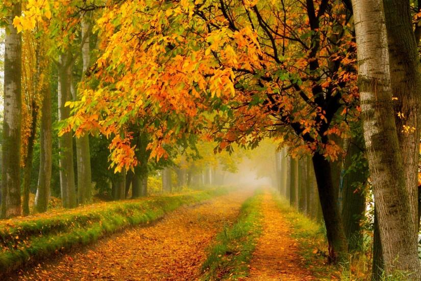 fall colors walk leaves autumn nature trees road forest park wallpaper  background