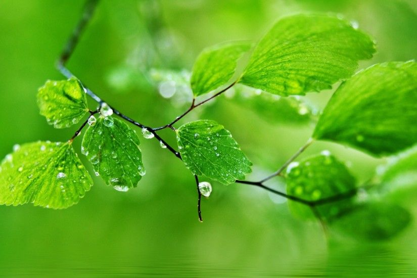 green leaf nature rain wallpapers hd pictures hd wallpapers 4k high  definition tablet smart phones colourful