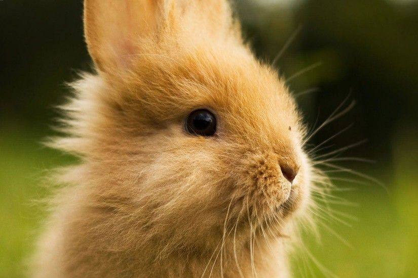 Cute Bunny Rabbit Cool HD Wallpapers Picture on ScreenCrot.