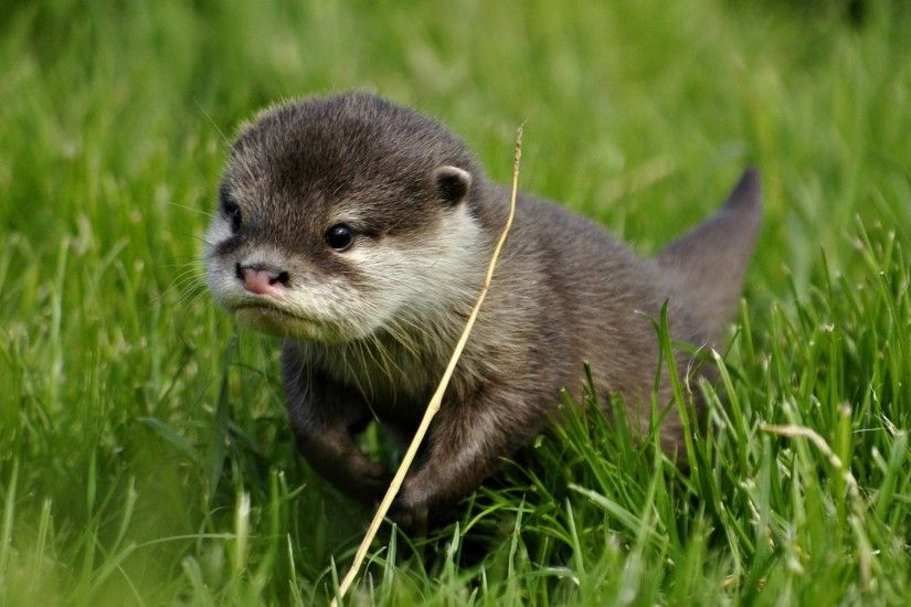 Otter HD pictures Otter full hd wallpapers