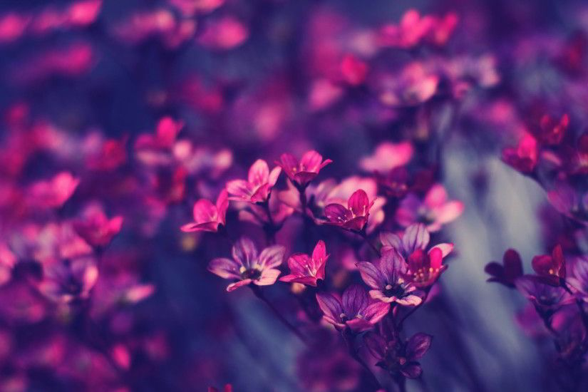 Free Wallpaper Little Purple Flowers Nature Download Mobile