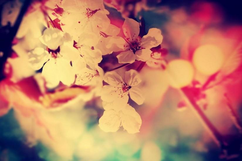 download floral background tumblr 1920x1080 for ipad