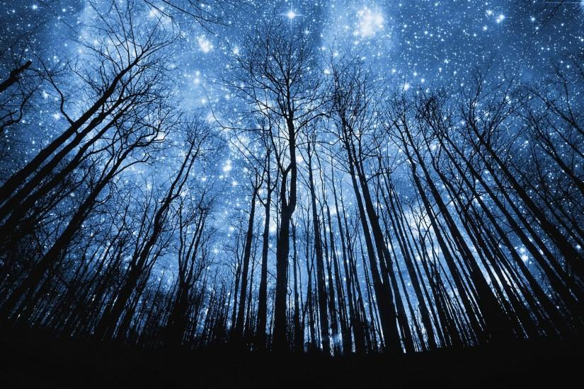 photo-manipulation-starry-night-in-forest-wallpaper | Lyn Leahz