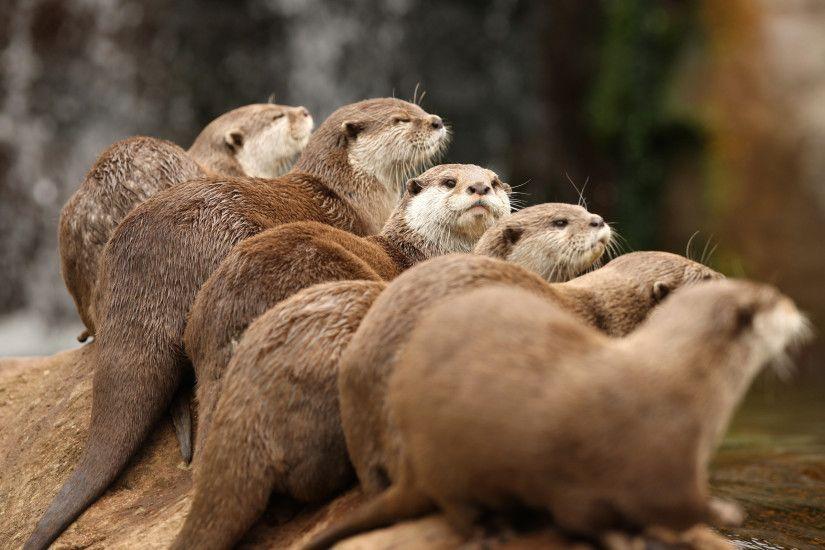 Otter Wallpaper Wallpapertag