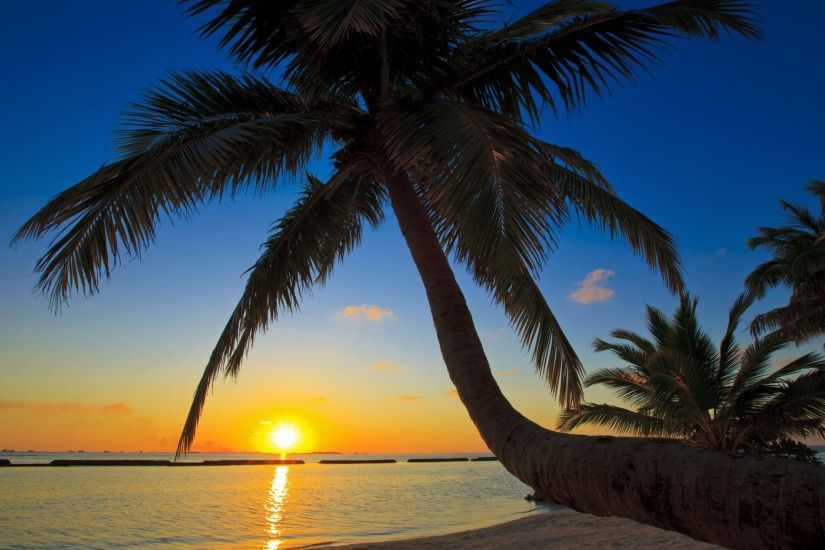 Palm Tree Beach Wallpaper 49772