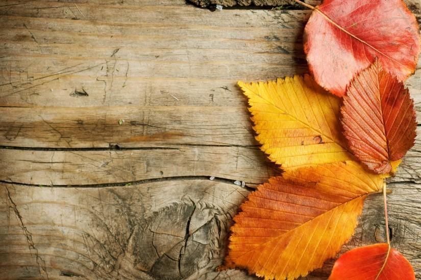 beautiful autumn background 2740x2048 for pc