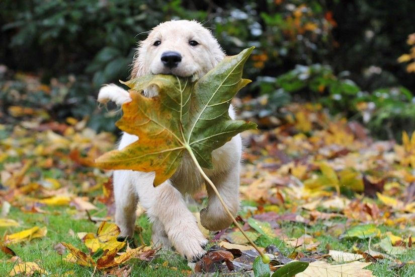 ... Images of Fall Wallpaper With Animals - #SC ...