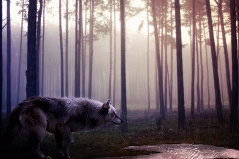 cool wolf wallpaper 1920x1080