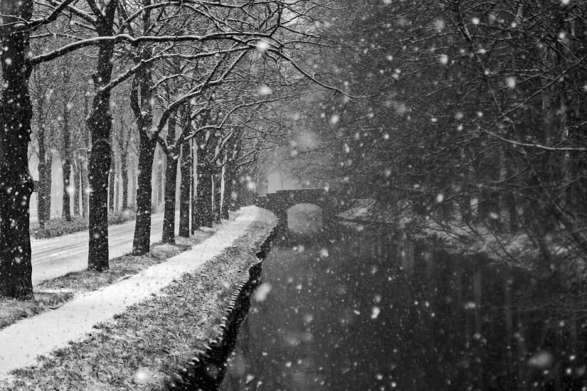 Landscapes winter trees snow flakes storm blizzard wallpaper .