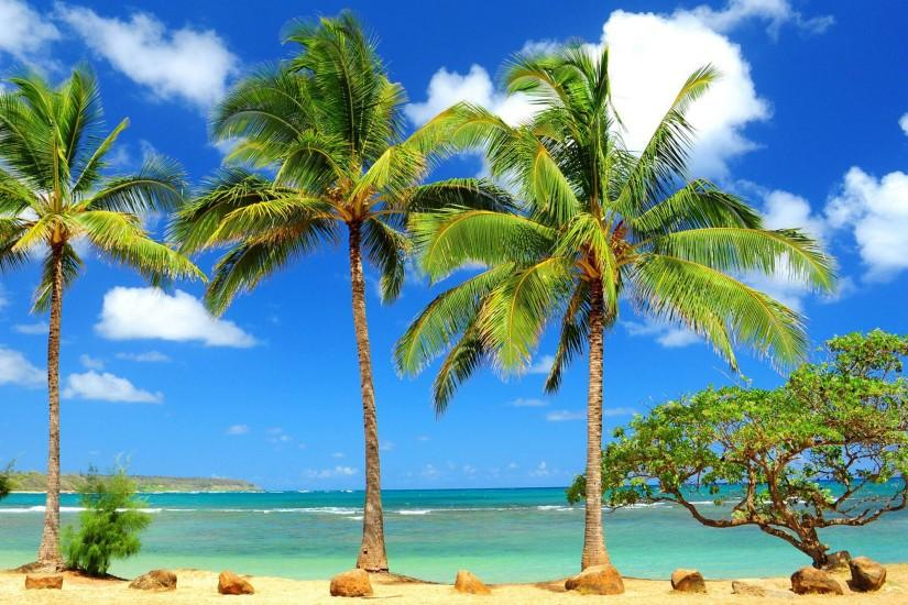Beach Palm Tree HD Wallpaper Free Download | HD Free Wallpapers .