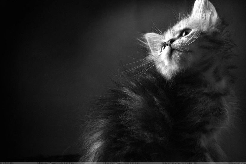 "You are viewing wallpaper titled ""Black N White Cat ..."