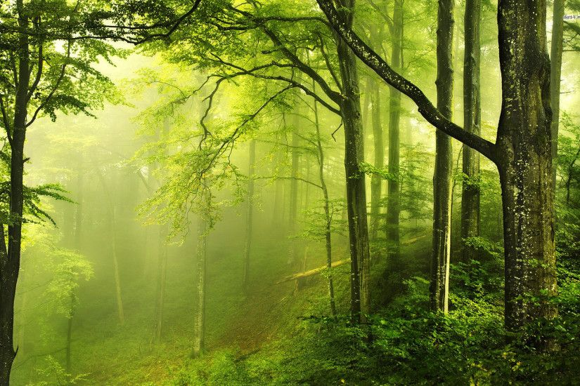 Nice Green Forest. Â«