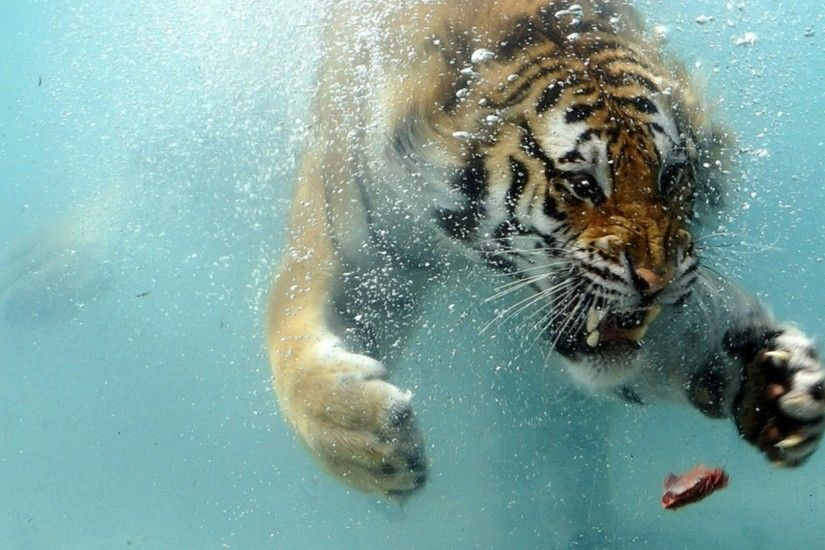 Preview wallpaper tiger, underwater, hunting, teeth, aggression, predator  3840x2160